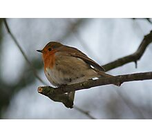 Robin Close Up On Branch Photographic Print