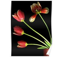 Pot of Tulips Poster