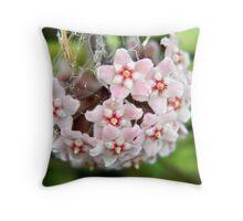 Soft pink hanging Hoya Throw Pillow