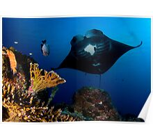 Manta in Coral Reef Poster
