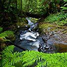 Rainforest Stream by Matt  Streatfeild