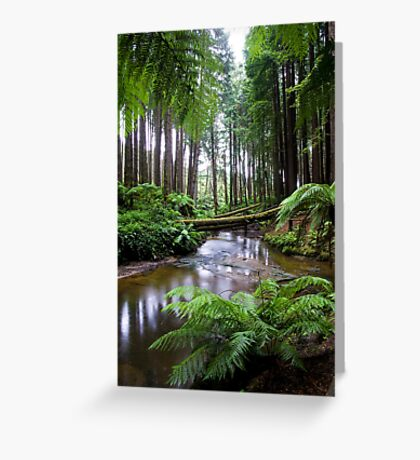 Redwood Forest Stream Greeting Card