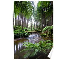 Redwood Forest Stream Poster