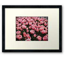 Tulips of Istanbul-TURKEY Framed Print