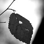 Leaf Study I by Erik Holladay