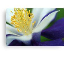 Macro Flower I Canvas Print