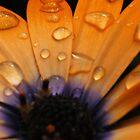 Macro Flower III by Erik Holladay