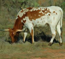 Brown and white longhorn by jabrwill