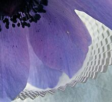 Anemone & Paper by Lynn Wiles