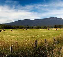 Field panorama on the road to Liffey Falls by nealbrey