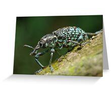 Diamond Weevil Greeting Card