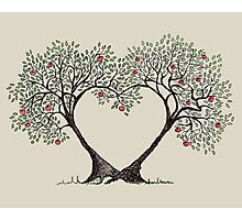 love trees Photographic Print