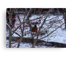 Robin and Red Berries--Riverside Park NYC In Snow Canvas Print