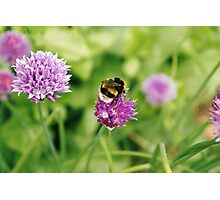 Bumble bee, Geffrye Museum, Shoreditch, London Photographic Print
