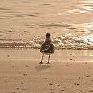 Pondering Seagull by deahna