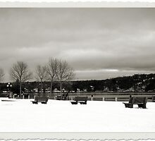 A Winters Day - DeWolf Park by JodiXoXo