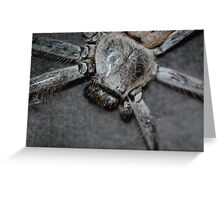 Couch Spider Greeting Card