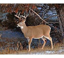 River Whitetail Photographic Print