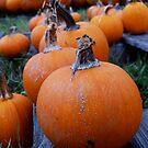 Pumpkins in a Row by Diana Forgione