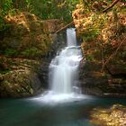 Coachwood Falls, Dorrigo National Park by Harley Kingston