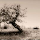 Old Apple Tree by GGleason