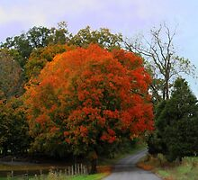 Autumn in Washington County Virginia by Linda Costello Hinchey