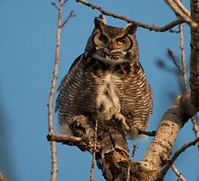 Perch-and-Pounce Hunter - Great Horned Owl by Joy Leong-Danen