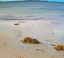 VictorHarbour_SeaweedOnTheBeach01 by Geoffrey Thomas