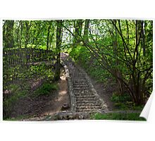 Rays of sun in the spring forest Poster
