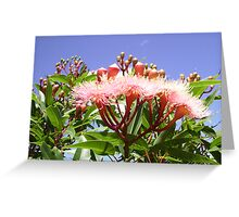 Pink Flowering Gum Tree with Blue Sky & Clouds Behind. Greeting Card