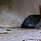 Kitty by MuscularTeeth