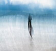 Blue swimmer by LouD
