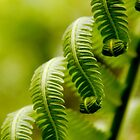 curls of green by lensbaby