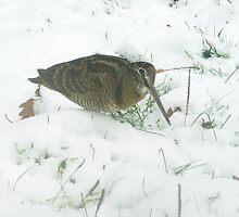 Woodcock by Carole Stevens