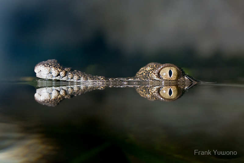 Periscope eyes by Frank Yuwono