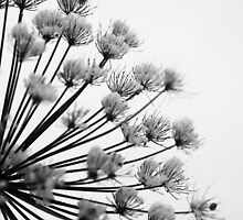 Winter Hogweed by PaulBradley