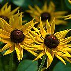 Sunny Rudbeckias by JHRphotoART