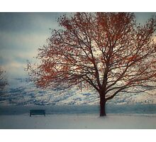 Winter in Peachland 2 Photographic Print