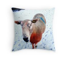 Woolly Rainbow in the snow. Lancashire. Northern England. Throw Pillow