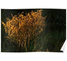 Sunset Brush Poster