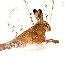 Dashing Through the Snow by dsargent
