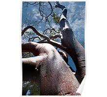 Mahogany Tree Poster