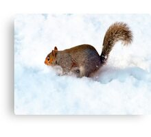 Where's the NUTS?? Canvas Print