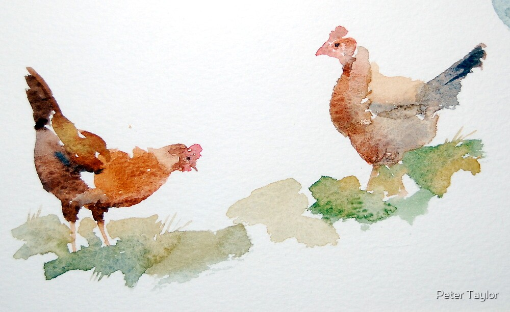 Hazels chickens by Peter Lusby Taylor