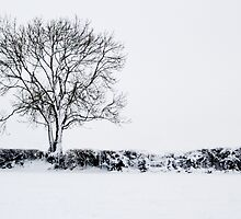 Snow Tree by Dave Hayward