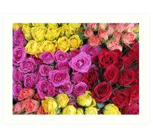 Roses, roses, roses... Art Print