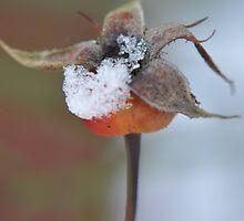 Rosehip in snow by loz788