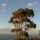 Eucalyptus tree-Mornington Peninsula by Jason Kiely