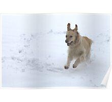 Snow fun Poster