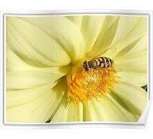 Honey Basics Poster